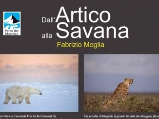 Dall'Artico alla Savana, la mostra di Fabrizio Moglia a Pian del Re