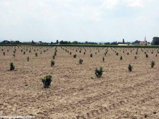 Tecnici dal Piemonte per gli impianti di nocciole in Veneto