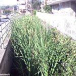 Alba: troppe erbacce presenti nel letto del rio Misureto