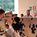 Fiera agricola: l'omaggio di Saluzzo a san Chiaffredo