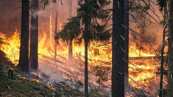 Massima pericolosità per gli incendi boschivi su tutto il territorio regionale