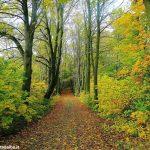 Priocca: domenica 7 ottobre si terrà la marcia d'autunno