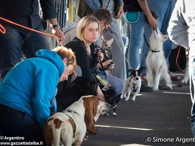Alba dog foto Simone Argentino (1)
