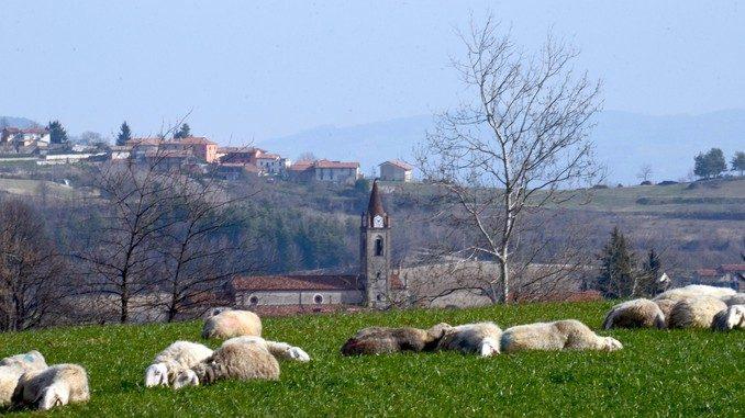 Coldiretti: «Tutelare gli allevamenti delle razze ovine in via di estinzione»