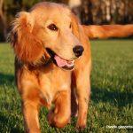 Il campo cinofilo Skipper organizza serate per amici dei cani