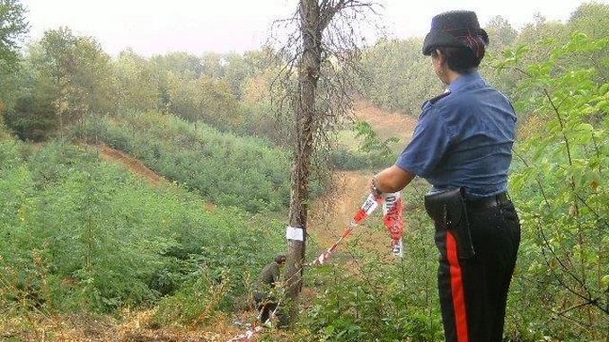 Parco paleontologico astigiano, sequestrato un ettaro dopo il taglio degli alberi senza autorizzazione