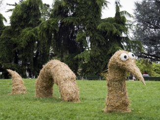 A Scaparoni domenica 10 settembre fiorirà la Land art 1
