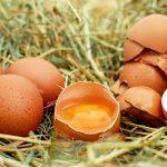 Uova al Fipronil: una denuncia e una sanzione nel Roero