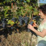Il Piemonte vinicolo viaggia a due velocità