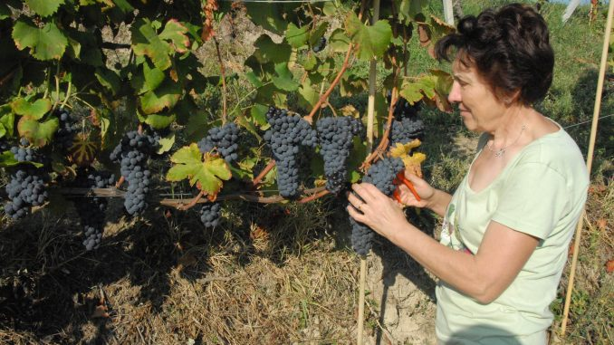 Vendemmia: un finale in crescendo