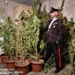 Somano: ritrovata una piantagione di marijuana in zona boschiva