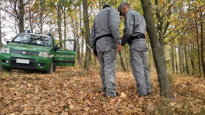 Scavi e zappature non ricoperti: trifolao multato dai Carabinieri nei boschi di Montà