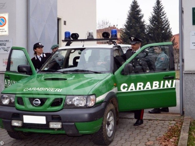 False perizie acustiche scoperte dai carabinieri forestali 1