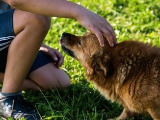 Il cane in città: a Canale un corso per gestire i cuccioli di casa