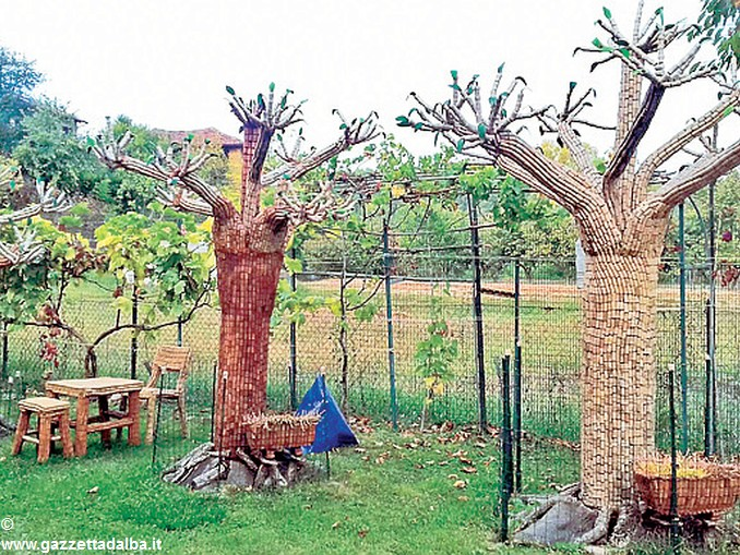 alberi coi tappi a neive