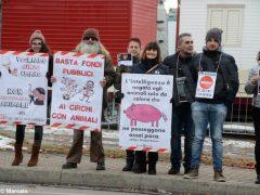 Manifestazione contro il circo con gli animali 1