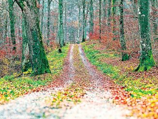 Con la nuova legge forestale il legno diventerà una risorsa