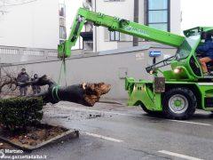 Un grande albero è crollato, ostruendo corso Michele Coppino ad Alba 4