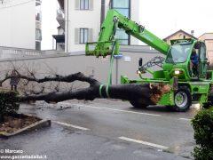 Un grande albero è crollato, ostruendo corso Michele Coppino ad Alba 5
