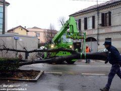 Un grande albero è crollato, ostruendo corso Michele Coppino ad Alba 6