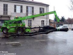 Un grande albero è crollato, ostruendo corso Michele Coppino ad Alba 8