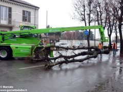 Un grande albero è crollato, ostruendo corso Michele Coppino ad Alba 9