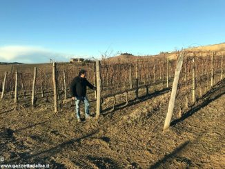 Nuovi vigneti nella zona del Barbaresco per l'azienda vinicola Rivetto