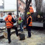 Alba: in corso l'abbattimento di alberi in corso Coppino