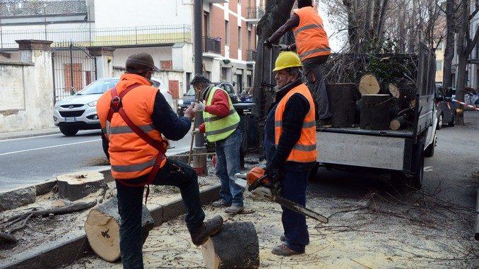 Alba: in corso l'abbattimento di alberi in corso Coppino 2