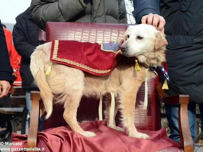 Trifolao Canale raduno Mara cane anziano 17 anni 1