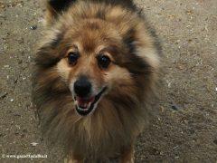 Canile di Alba: Skizzo e Lulù cercano urgentemente casa