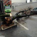 Un albero è crollato, ostruendo corso Michele Coppino ad Alba