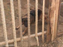 Montà: scoperto dall'Organizzazione internazionale protezione animali un canile abusivo 1