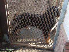 Montà: scoperto dall'Organizzazione internazionale protezione animali un canile abusivo 2