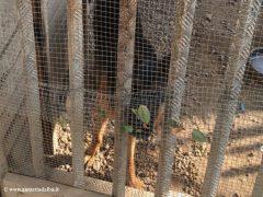 Montà: scoperto dall'Organizzazione internazionale protezione animali un canile abusivo 3