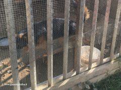 Montà: scoperto dall'Organizzazione internazionale protezione animali un canile abusivo 4