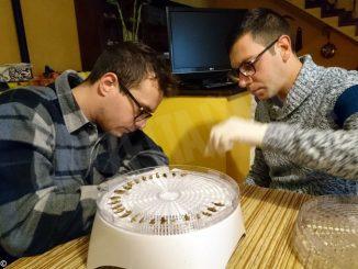Giovani imprenditori allevano grilli per trasformarli in farina
