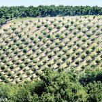 Nocciole e vite: come produrre migliorando e in modo sostenibile