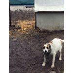 Denuncia dell'Oipa per due cani maltrattati nei dintorni di Cortemilia
