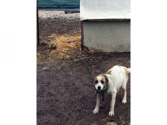 Due cani maltrattati nei dintorni di Cortemilia: l'Oipa sporge denuncia