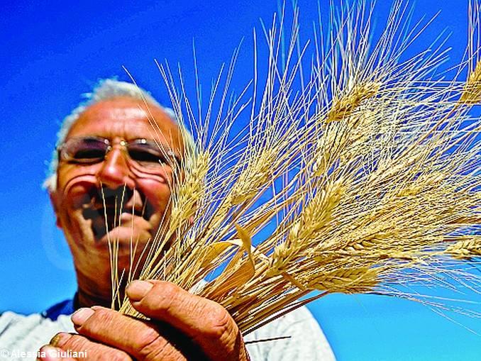 uomo spighe grano
