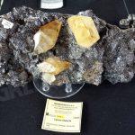 GeoBra, minerali, fossili e reperti in mostra al Movicentro di Bra