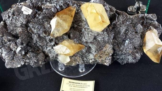 GeoBra, fossili e reperti in mostra al Movicentro