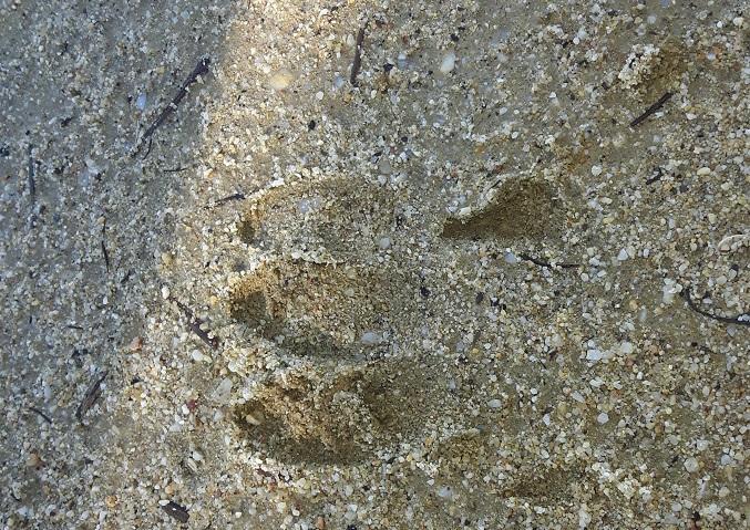 Una misteriosa impronta, trovata nel Canalese, incuriosisce il Web 1