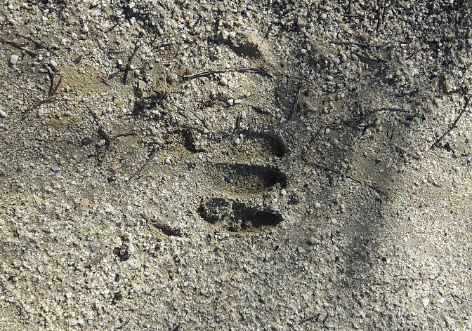Una misteriosa impronta, trovata nel Canalese, incuriosisce il Web 2
