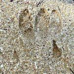 Una misteriosa impronta, trovata nel Canalese, incuriosisce il Web