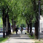 Nei prossimi giorni verranno abbattuti alcuni alberi nei viali di Alba
