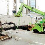 Si controllano gli alberi della città, gli olmi sono gli osservati speciali