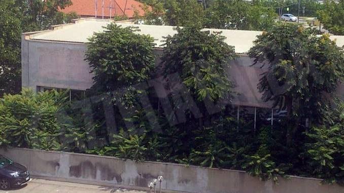 Ailanto: ha il paradiso nel nome ma è un albero infestante