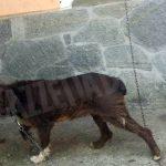 Catena corta e acqua putrida: le guardie eco-zoofile soccorrono un cane